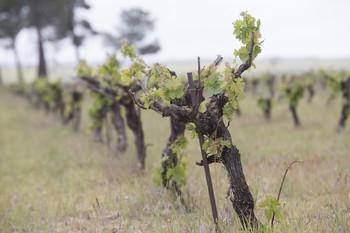 'Framework': menos problemas agrícolas y más biodiversidad