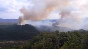 Extinguido el incendio de un pinar en Lónguida