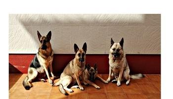 Denunciada por ofertar en Internet cachorros de perro