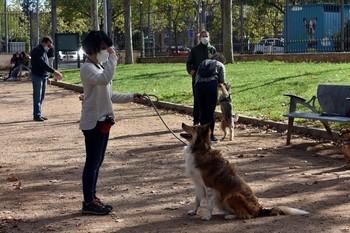 Taller de entrenamiento canino en Ciudad Real