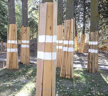 IU pide a Urbanismo que evita talar árboles en Los Jardinill