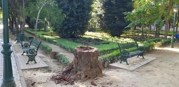 Retiran el árbol caído en los Jardines del Prado