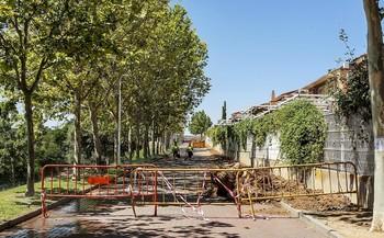 Los vecinos ven «indiscriminada» la tala de 25 árboles sanos