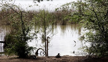 'Bosque biodivertido' invita a mejorar La Grajera