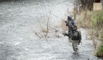 La pesca a mosca sin muerte es una modalidad que se va imponiendo entre los pescadores burgaleses.