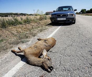 Los choques con animales apenas bajaron