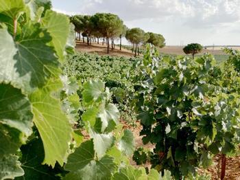La Junta eleva a 230.000€ el dinero para las Rutas del Vino