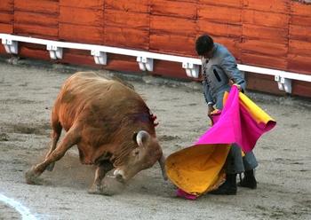 Cáritas celebra su festival taurino este domingo