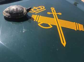 Recuperan una tortuga de especie exótica en Estella