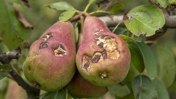 Los fruticultores reciben 5,8 millones por helada y granizo