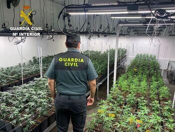 La Guardia Civil localiza 1.400 plantas de marihuana