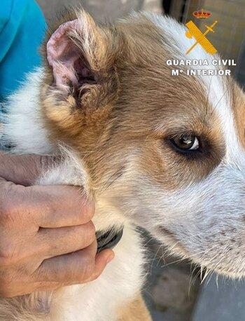 Investigan a un vecino de Caudete por maltrato animal