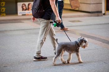 Paseo de mascotas hasta las 22 horas y cerca de casa