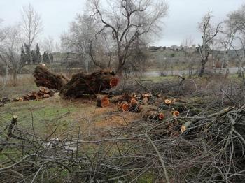 Ecologistas en Acción presenta denuncias por el taray talado