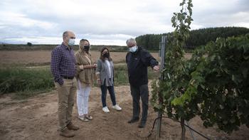 El Gobierno impulsa la investigación vitivinícola