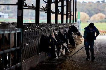Africama denuncia que el vacuno de leche «está en la UVI»