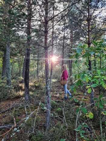 Montes de Soria obtiene la declaración de Parque Micológico