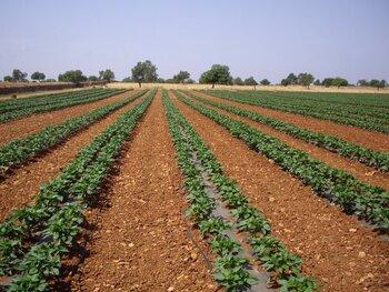 Inserción sociolaboral en la producción ecológica