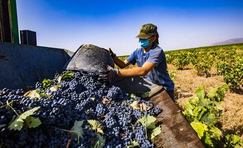 Asaja critica la «pasividad» ante el bajo precio de la uva