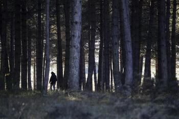 El segundo parque micológico de CyL está en Burgos y Soria