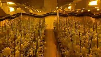 Desmantelan el mayor laboratorio de marihuana de Valladolid