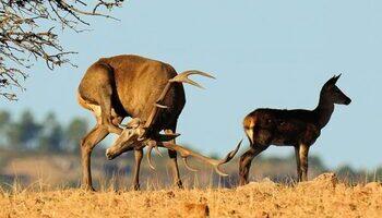 Reunión de la UE para la gestión eficiente de la caza