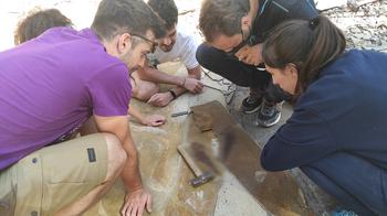 El dinosaurio 'cojo' de Las Hoyas mediría seis metros