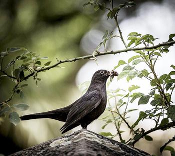 El turismo ornitológico crece en Soria