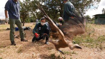 Al menos 292 animales han muerto por veneno en 25 años