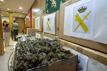 Pillan un laboratorio con 860 plantas de marihuana en Ávila
