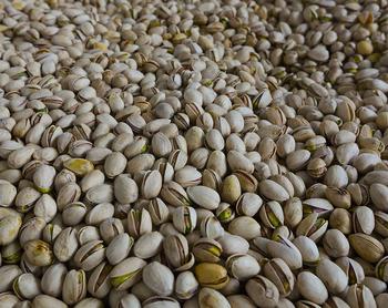 El pistacho de La Mancha, en el punto de mira