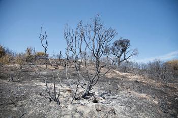 Gurelur solicita la puesta en marcha de medidas ambientales