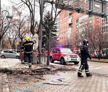 Los bomberos sanean las ramas peligrosas