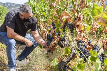 La sequía diezma los cultivos de secano en La Rioja