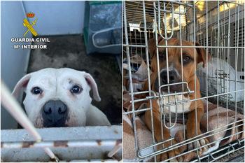 La Guardia Civil rescata a dos perros en Escalona