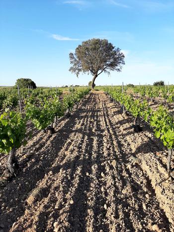 Elecciones en las nueve denominaciones de origen del vino