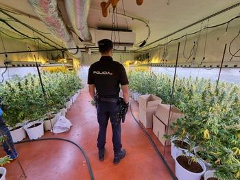 Nueva operación contra el cultivo de marihuana en Fontanar