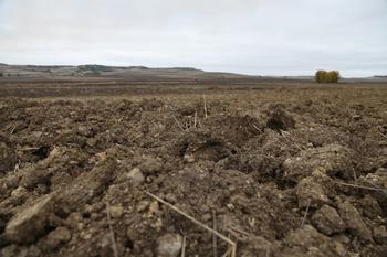 Caen los precios de la tierra agraria