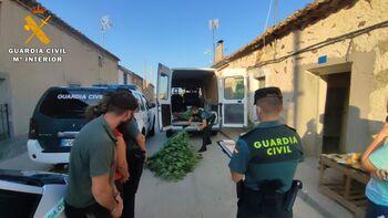 Detenidas tres personas por cultivar marihuana