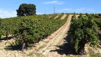 Cuatro rutas del vino y un objetivo común