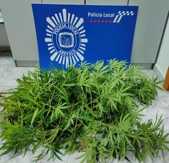 La Policía Local incauta dos grandes plantas de marihuana