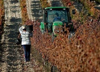 Bruselas da la espalda al vino