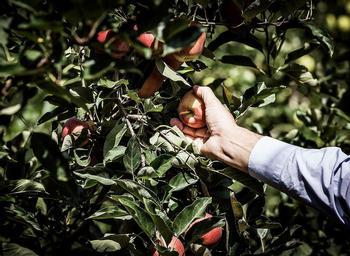Desde cualquier lugar, el agricultor puede tener pleno control de su negocio y poner en el mercado la cosecha en curso o a futuro.