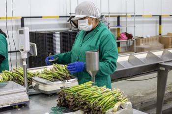 Una mujer trabaja en una envasadora de espárragos.