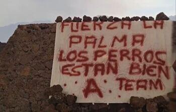 El 'Equipo A' rescata a los podencos atrapados en La Palma
