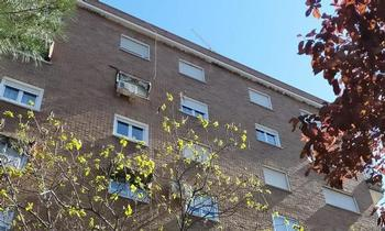 La Junta autorizó la retirada de los nidos de avión común