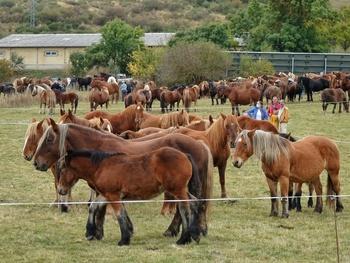 Equinos de buen año en La Pernía