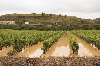 Viñedos tras las últimas lluvias en La Rioja