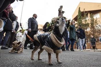 La tradición de San Antón