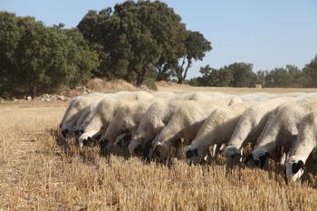 Agricultura, ganadería y caza son el presente y el futuro